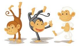 Scimmie Immagini Stock Libere da Diritti