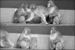 Scimmie a Amsterdam Fotografie Stock Libere da Diritti