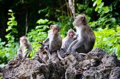 Scimmie che controllano per vedere se ci sono le pulci e tacche nella famiglia Fotografia Stock Libera da Diritti