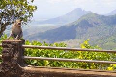 Scimmie che giocano nel tempio in Mauritius Fotografia Stock