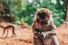 Scimmie del bambino Immagine Stock