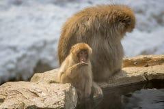 Scimmie del bambino e della madre, Nagano Giappone Immagine Stock
