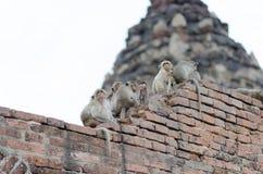 Scimmie della famiglia fotografia stock libera da diritti