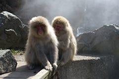 Scimmie della famiglia Immagini Stock