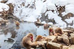 Scimmie della neve Fotografie Stock