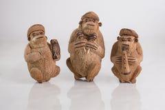 Scimmie della noce di cocco Fotografie Stock