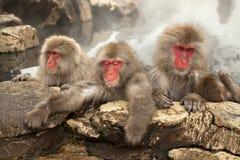 Scimmie della stazione termale Fotografia Stock