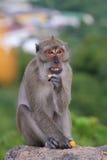 Scimmie della Tailandia Immagini Stock Libere da Diritti