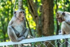 2 scimmie di macachi sedute sopra un recinto di filo metallico Immagine Stock