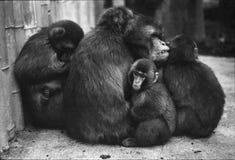 Scimmie di riscaldamento fotografia stock