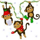 Scimmie divertenti nell'insieme di inverno Immagini Stock Libere da Diritti