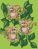 Scimmie e fogli Immagine Stock
