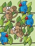 Scimmie ed uccelli Immagini Stock