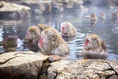 Scimmie giapponesi della neve Immagini Stock Libere da Diritti