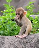 Scimmie in Hong Kong Fotografia Stock