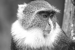 Scimmie nel parco della città di Nairobi Fotografia Stock