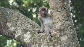 Scimmie nella foresta in Bali Fotografia Stock Libera da Diritti