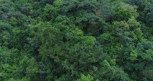Scimmie nella giungla stock footage