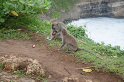 Scimmie selvagge Immagine Stock Libera da Diritti
