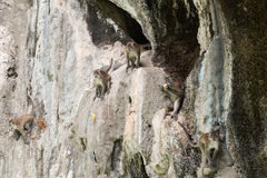 Scimmie sulla roccia Immagine Stock Libera da Diritti