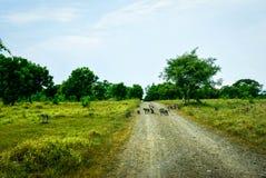 Scimmie sulla savanna Immagine Stock Libera da Diritti