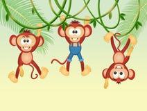 Scimmie sulle liane nella giungla illustrazione di stock