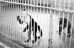 Scimmie tristi nella gabbia dello zoo fotografia stock