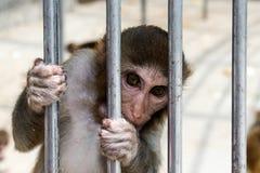 Scimmie in una casa della scimmia a Sukhumi, Abkhazia Fotografie Stock Libere da Diritti
