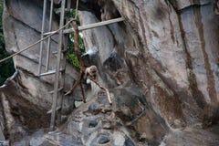 scimmie Zoo Tokyo Giappone di Ueno Immagini Stock