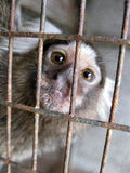 Scimmietta in gabbia. A poor little monkey closed in a cage at the zoo Royalty Free Stock Images