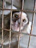 Scimmietta no gabbia Imagens de Stock Royalty Free