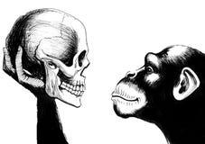 Scimpanzè con un cranio umano Immagini Stock Libere da Diritti