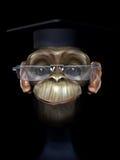 scimpanzé del professore Immagine Stock Libera da Diritti