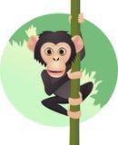 Scimpanzé sveglio Immagine Stock