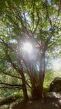 Scintilla attraverso gli alberi fotografia stock libera da diritti