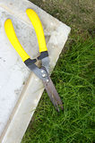 Scissors cut the grass Stock Photo
