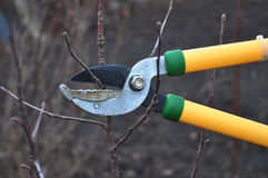 Scissors is cutting branches from tree, spring trimming Stock Photos