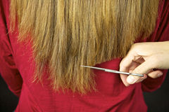 Scissors cutting long hair Stock Image