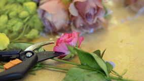 Scissors and pink rose. Scissors lays on table near the rose. Instrument for cutting stulks. Equipment of flower shop. Camera in motion. Close-up. Prores codec stock video footage