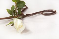 Scissors and rose Stock Image