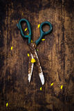Scissors in spring. Tools on the village.  Scissors in spring Royalty Free Stock Images