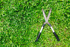 Scissors to cut the grass on green grass Stock Photography