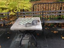A Sciurus Carolinensis Sitting on a Chess Table in City Hall Park in Manhattan in the Fall. Royalty Free Stock Photo