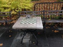 A Sciurus Carolinensis Sitting on a Chess Table in City Hall Park in Manhattan in the Fall. Royalty Free Stock Photos