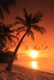 Scène avec le coucher du soleil à l'arrière-plan chez les Maldives Image libre de droits
