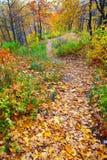 Scène de forêt d'automne Image libre de droits