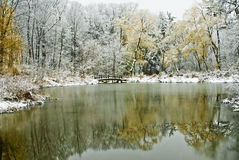 Scène de l'hiver avec l'étang et les arbres Photos libres de droits