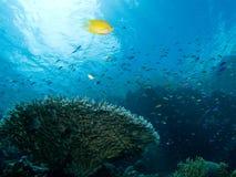 Scène de récif coralien Photos libres de droits