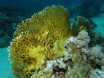 Scène de récif coralien avec des poissons Photo libre de droits