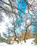 Scène gentille de l'hiver Photos stock